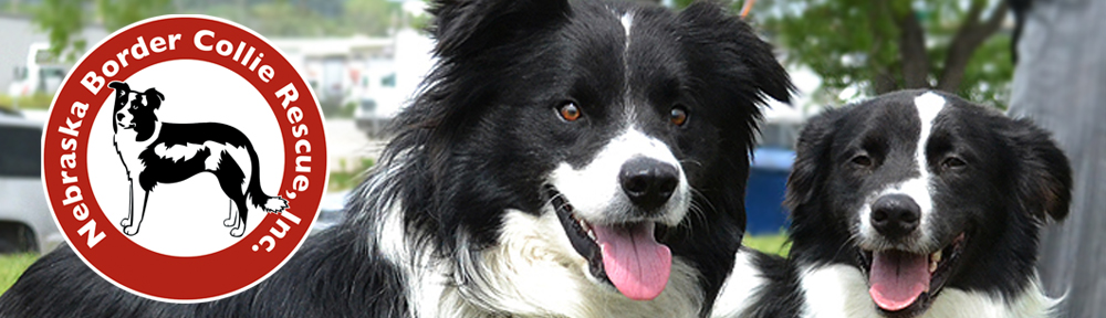Nebraska Border Collie Rescue, Inc.